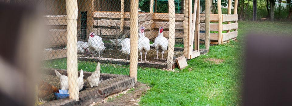 Detail prístrešku pre zvieratá. Tu majú svoj domov sliepočky, morky, prasiatka, ovečky